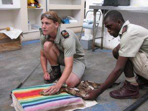 Photo #4 treating a Gaboon viper, Khamai