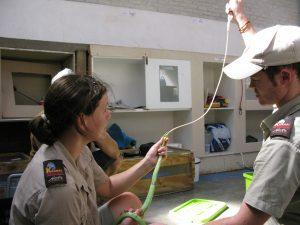 Photo #5 treating a green mamba